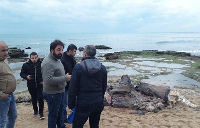 """بعد العثور على الحوت النافق على شاطئ الصرفند.. """"الزراعة"""" تتحرّك"""